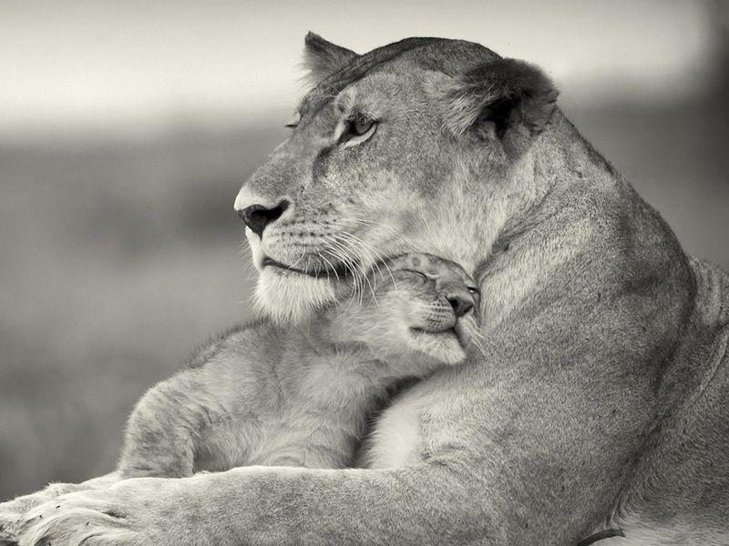 leona madre.jpg