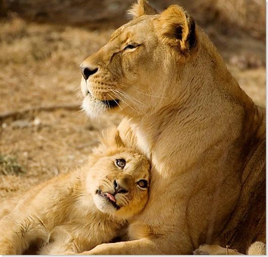 leonas 31.jpg